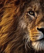 ライオン SHOP