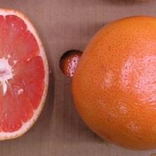 Grapefruit Ruby Florida 40 Ball