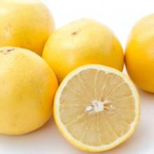グレープフルーツ ホワイト フロリダ産 40玉